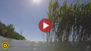 Videó - Vad Balaton (trailer)